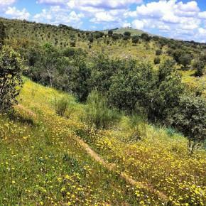 Ciudadanos lamenta que el PP rechace la promoción de los espacios Red Natura 2000 de Azuaga